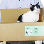 Cajas para mudanzas en SelfPackaging. ¡Múdate chachi!