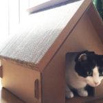 Juguetes de cartón para gatos