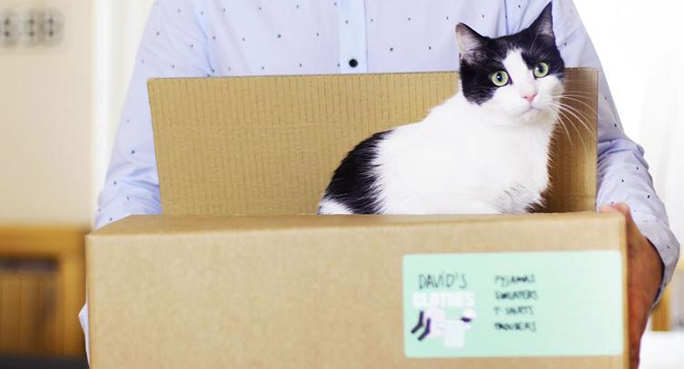 juguetes de carton para gatos 1