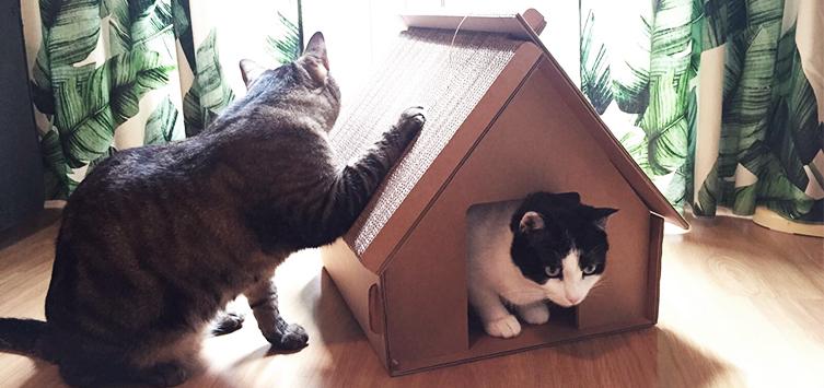 juguetes para gatos 28